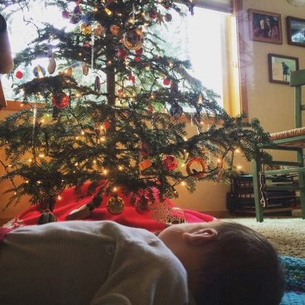 Luci examines her first Christmas tree. She might think that trees just belong in the house.